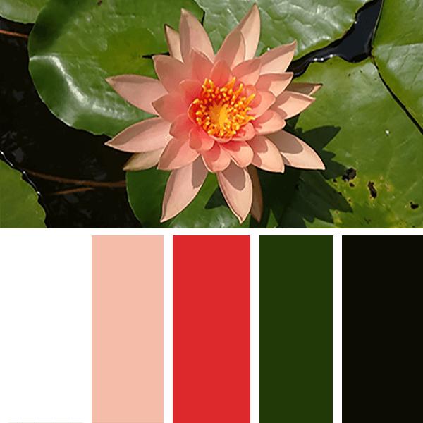 Lotus colours